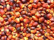Refined and Crude : Palm oil ,  Sunflower oil