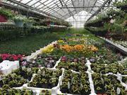 Buy Online Fruit Trees & Plants From Nursery