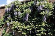 Best and Organic Fruit Trees Nursery In UK   Greenhills Nursery Ltd